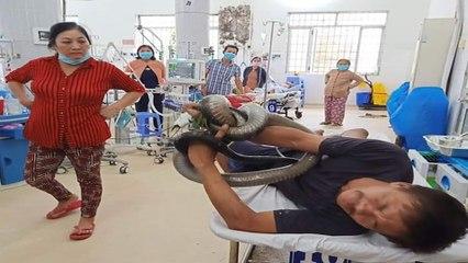 Sức khỏe của bệnh nhân mang rắn độc 5kg vào viện   VTC