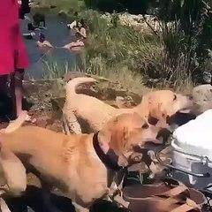 Quando um cão faz questão de provar aos amigos do dono quem realmente é o seu melhor amigo...