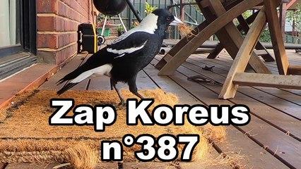 Zap Koreus n°387