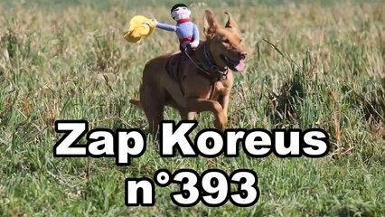 Zap Koreus n°393