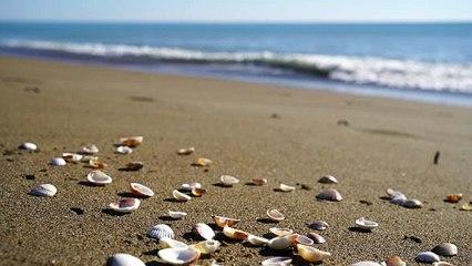 Video of beach shore