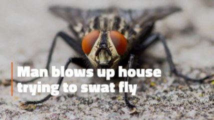 The Fly That Caused An Explosion