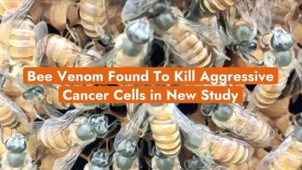 The Mystery Around Bee Venom