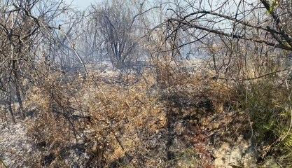Incendie sur l'Oppidum des Baou
