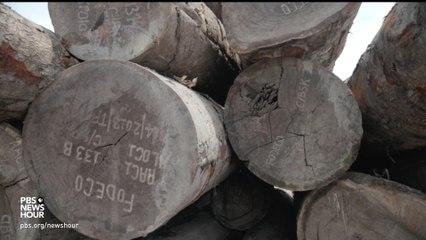 Widespread Logging Threatens The Congo Basin's Critical Rainforest