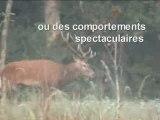 Les animaux sauvages de la forêt de Fontainebleau