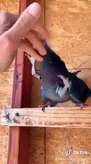 Des oiseaux avec des pattes avant