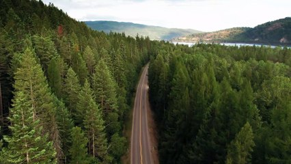 Drone view of road in the middle of forest