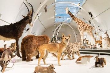 À la découverte de «Planète vivante», la nouvelle galerie permanente du Muséum des Sciences naturelles