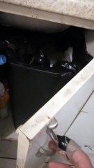 Infestation de rats - Ça bouge dans la poubelle