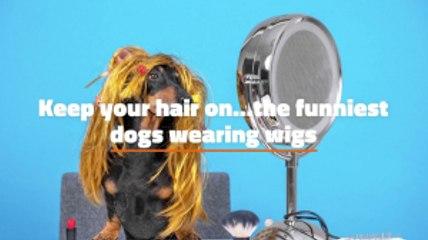 Funny Dog Fashion