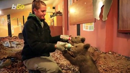 Adorable Orphan Bears Released Into the Wild