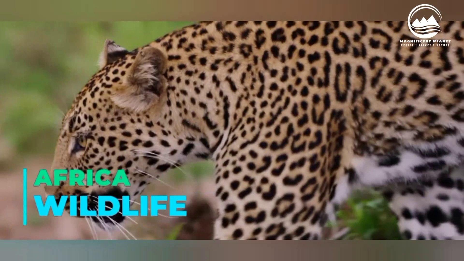 Africa- wildlife