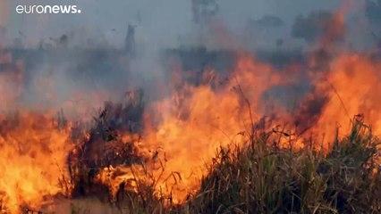 آتشسوزی در برزیل بخشی از بزرگترین تالاب استوایی جهان را میسوزاند