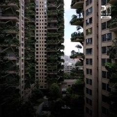Chine: Des habitants fuient leur immeuble (trop?) végétalisé