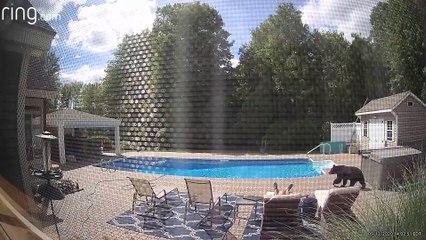 Visite surprise au bord d'une piscine