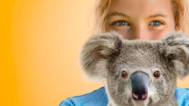 Izzy's Koala World Season 1
