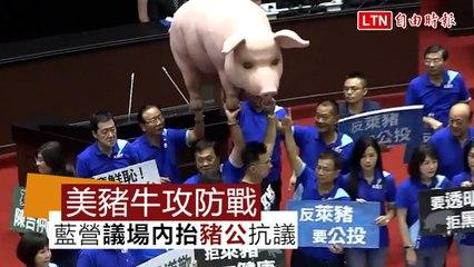 美豬牛開放》立院攻防美豬牛議題 藍營在議場抬豬公抗議