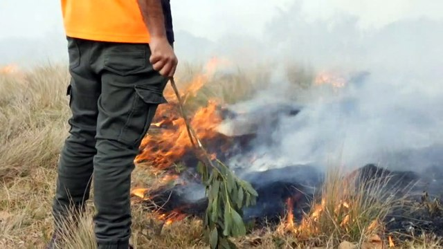 Cultural burning making a resurgence on NSW South Coast
