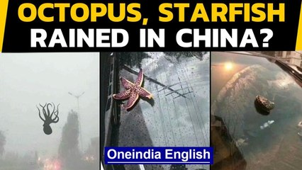 China: Sea creatures fell from the sky during a powerful storm, how did it happen | Oneindia News