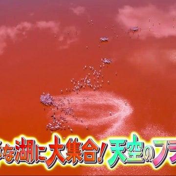ダーウィンが来た  2020年9月20日 !「天空のフラミンゴ 謎の赤い湖に集結」