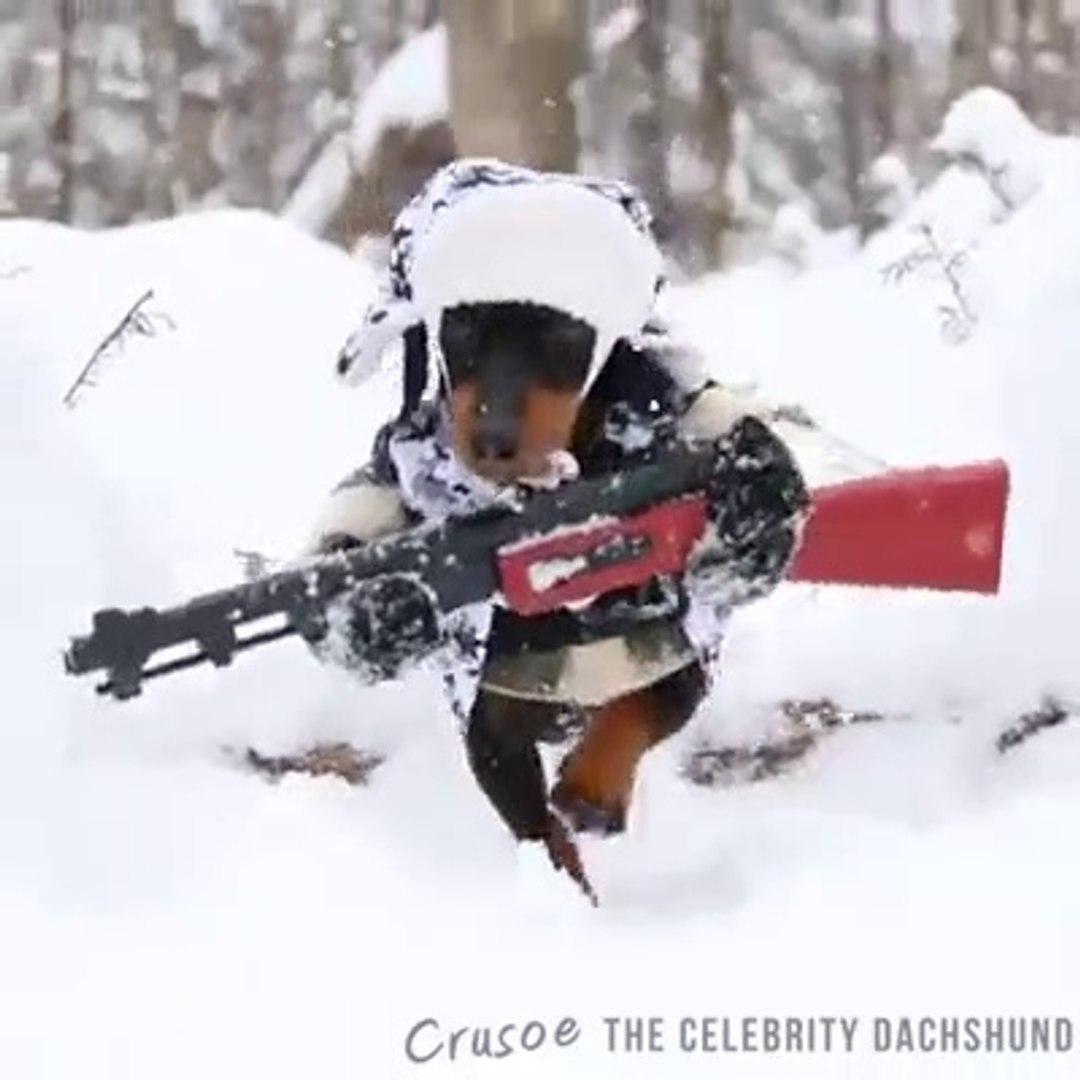 TAM DONANIMLI AV KÖPEĞİ - SOLDiER HUNTiNG DOG