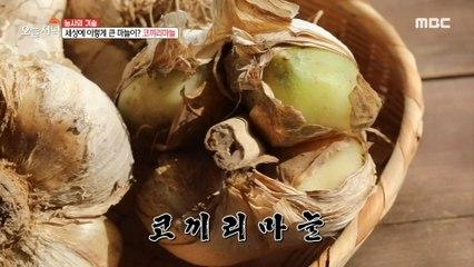 [HOT] Oh, my God. This big garlic? elephant garlic, 생방송 오늘 저녁 20200922