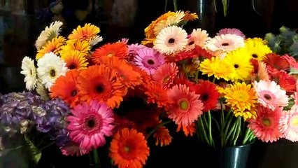 Fleuriste La Prairie (Le Reflet - Vicky Girard)