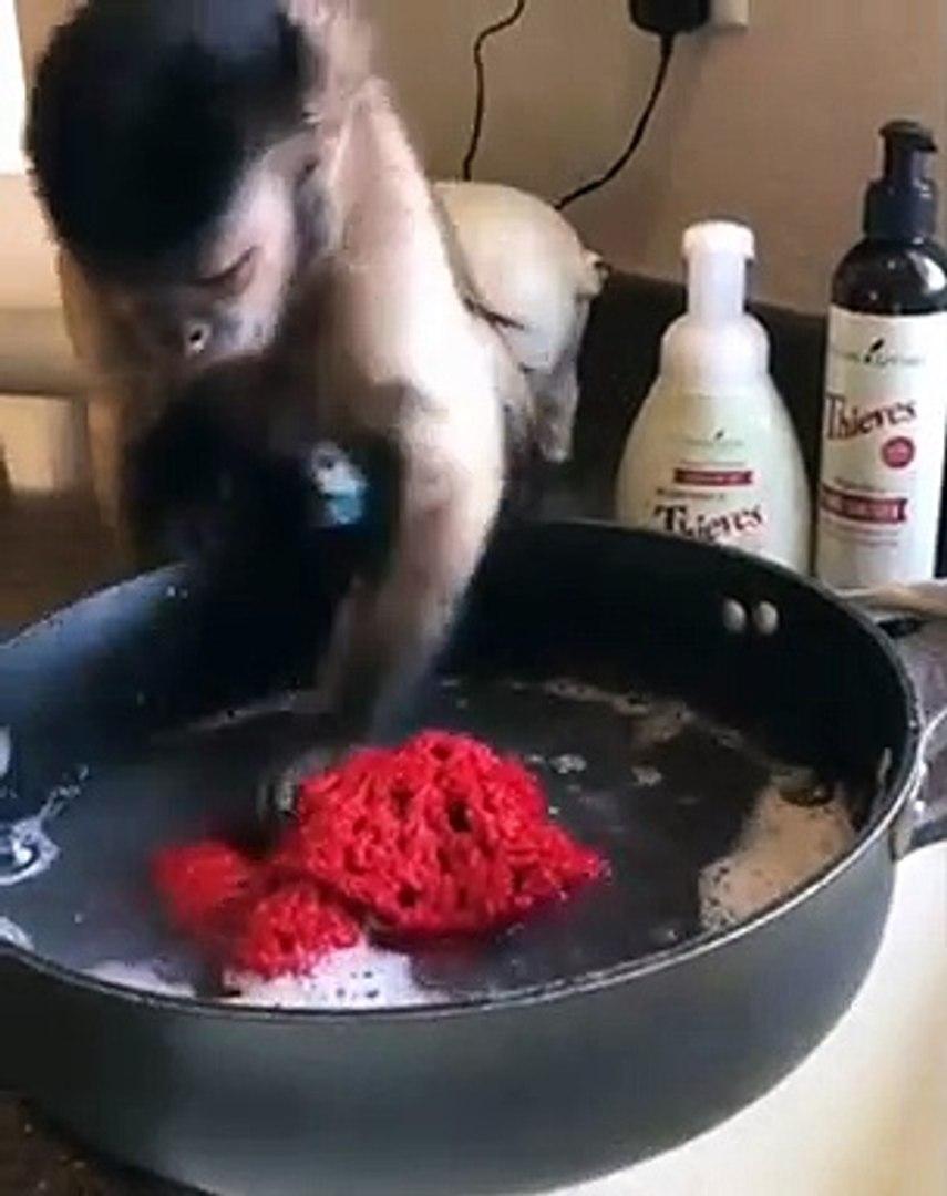 Monkey washes clothes softly