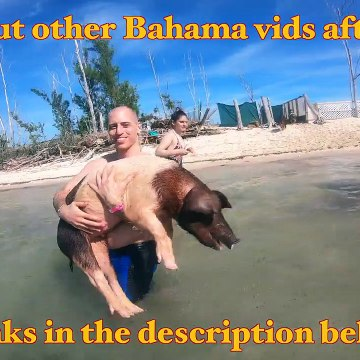 Scuba Diving with Reef Sharks - Freeport Bahamas