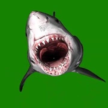 3D ANIMATED SHARK JAWS III GREEN SCREEN