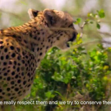 East Africa's Maasai have embraced an innovative way of saving their wildlife and grasslands