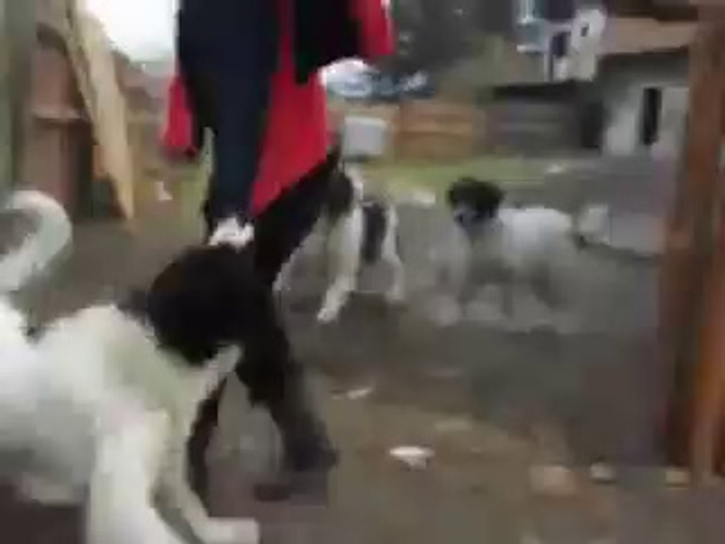 KOPEKLERi KIZDIRIRKEN BAKIN BASINA NE GELDi - TEASiNG DOGS and BEiNG BiTTEN