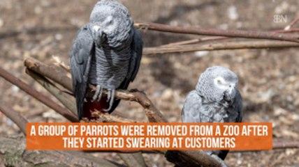 Parrots Swear Like Sailors