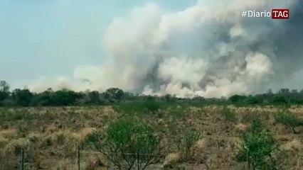 Más de 600 hectáreas y animales muertos por un incendio en El Tacuruzal