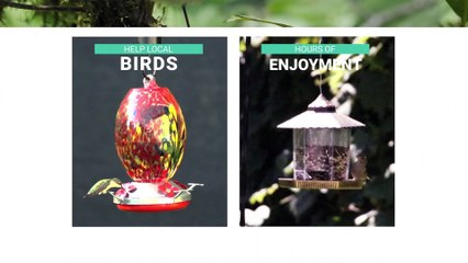 Great Bird Feeders for your Feathered Friends
