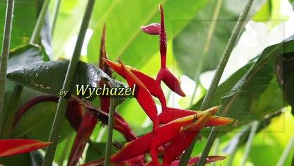 Wychazel - TAO-A Path of Peace - Raindrops on Leaves