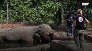 تعرفوا إلى الفيل الأكثر وحدة في العالم !!!