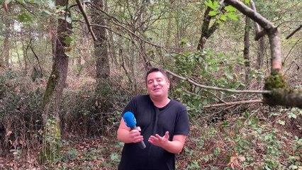 En forêt de Bouconne (31)