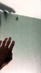 Guy scared of touching this spider VID ID - VIDID