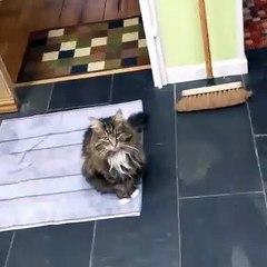 This cat loves tuna
