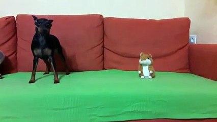 Ce chien n'aime pas son nouveau compagnie