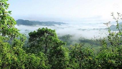 40 % de la forêt amazonienne pourrait se transformer en savane