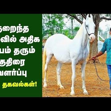 மாதம் 85 ஆயிரம் சம்பளத்தை மறுத்து குதிரை வளர்க்கும் பட்டதாரி இளைஞர் | Horse Farm