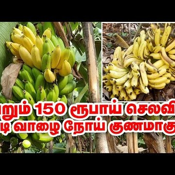 கொடிய நோய்க்கு வெறும் 150 ரூபாய் செலவில் மருந்து... அசத்தும் தேனி மருத்துவர்! #Banana