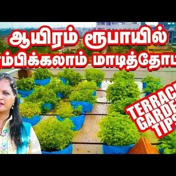 ஆயிரம் ரூபாயில் அற்புதமான மாடித்தோட்டம்! | Terrace Garden Tips