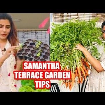 Actress Samantha-வின் மாடித்தோட்ட விவசாயம்! | Terrace Gardening #Samantha