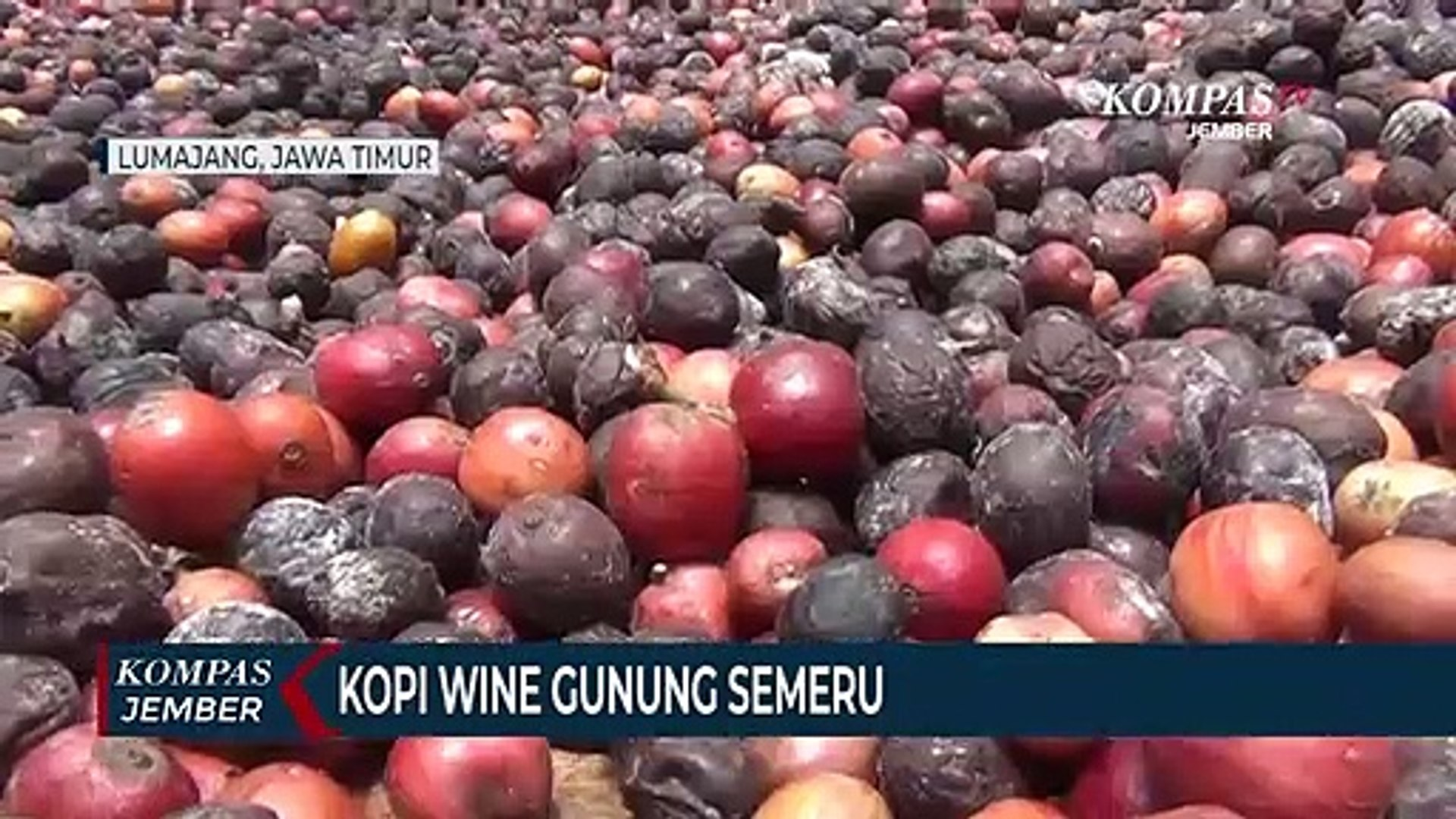 Cita Rasa Khas Kopi Wine Gunung Semeru Video Dailymotion