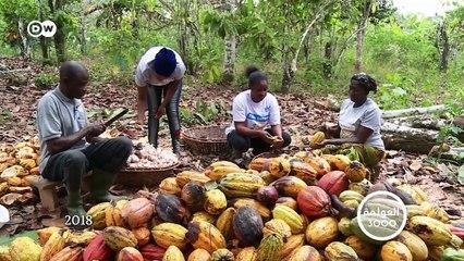 غانا: زراعة الكاكاو