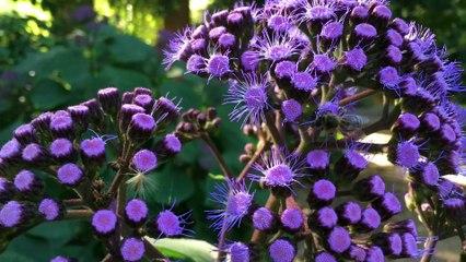Bee @Botanic Garden Adelaide